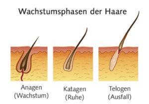 Wachstumsphasen der Haare